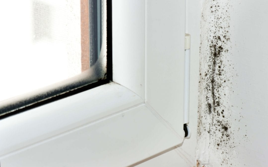 Mold in the Home: Causes and Cleanup